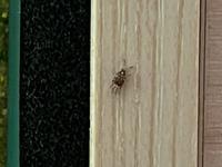 刺す虫の名前を教えてください。  室内に小さな虫が発生して困っています。 体調2mm程の黒い虫で、凄く刺してきます。 刺された跡は腫れと痒みがひどいです。 窓は締め切っているのですが、換気口などから侵入してきているのでしょうか。 余り飛ぶ事はせず、カーテンや家具を歩き回っています。  一旦掃除機で吸い取っても、半日もすれば明るいカーテンに20匹くらい付いてます。 その他部屋中...