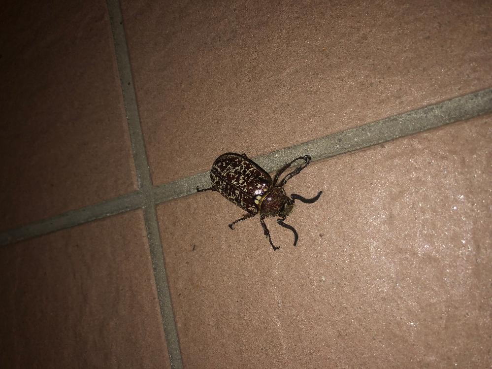 この虫の名前を教えてください! 宜しくお願いします!