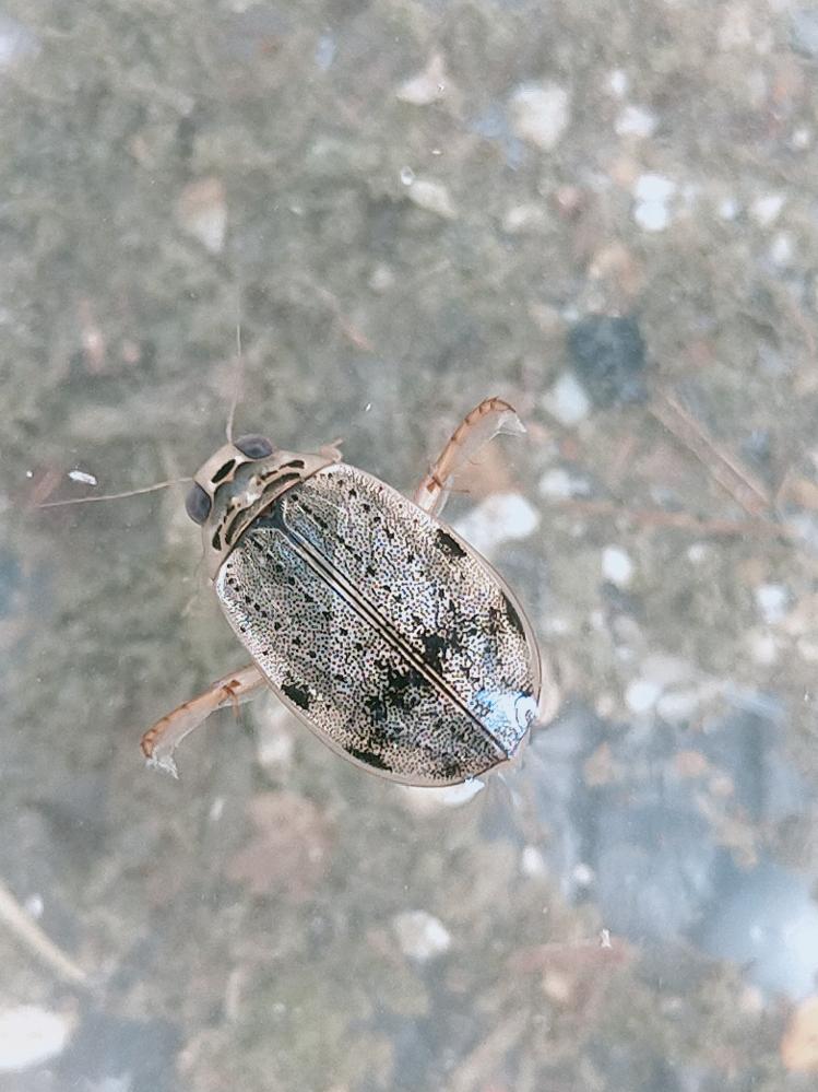 この虫何か分かりますか?