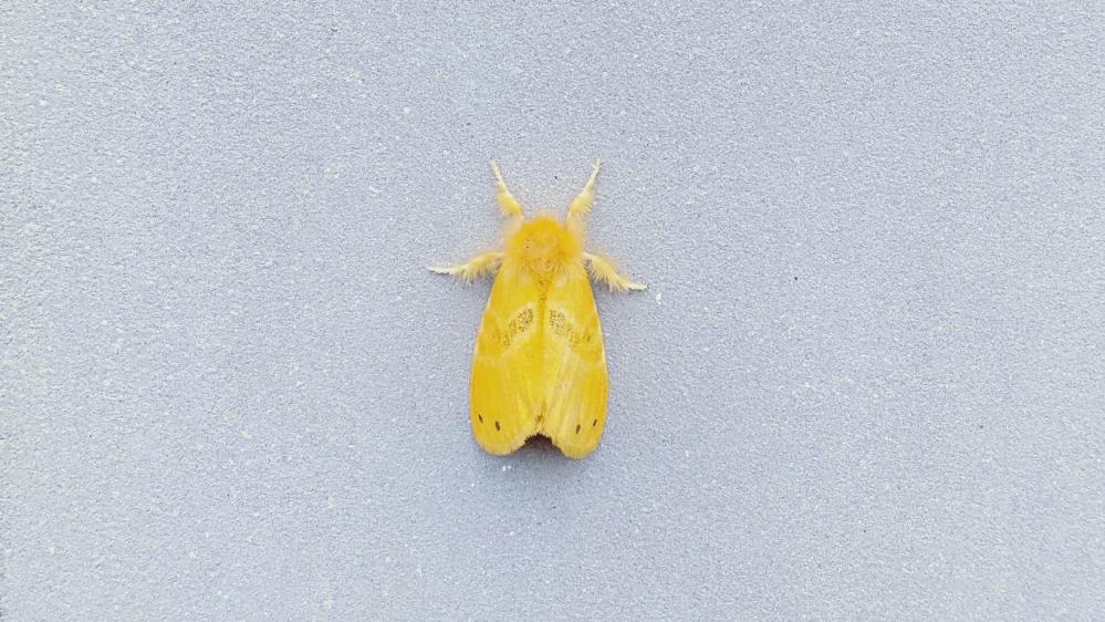 この蛾の名称はなんですか。触ると危険でしょうか?見たことなくて気になりました。