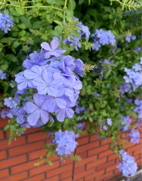 これは何という花の名前ですか?