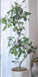 この植物を教えてください!