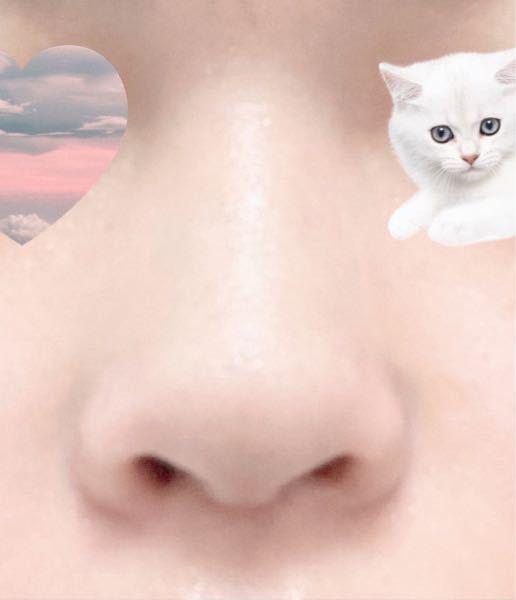 これだんご鼻ですか?