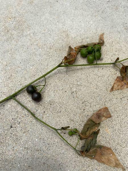 これなんの実かわかる方いますか? 他の部分は捨ててしまったんですが、庭に生えていました。
