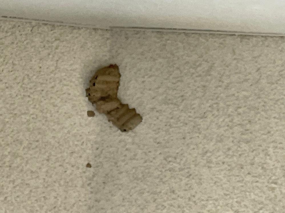 マンションの階段に蜂の巣があったのですが、画像から種類の特定は出来ますか?