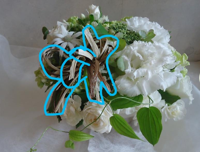 【画像あり】 この植物何ですか? 水色の線で囲んだ植物です。 葉っぱのようですが…