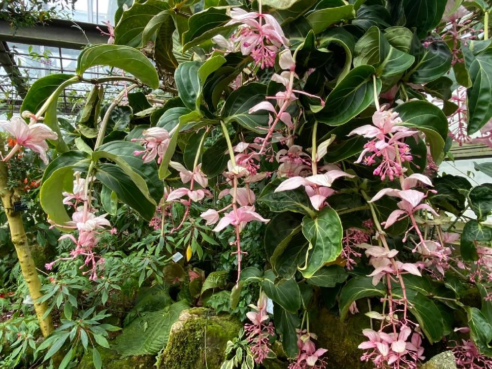 植物に詳しい方、京都市植物園で6月に写真を撮ったこの植物の名前を教えてください(-_-)
