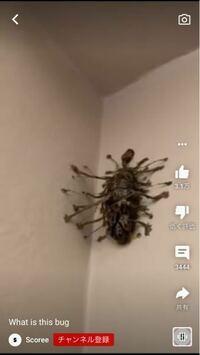 これってなんの生き物か分かりますか?? 動画だったんですけど、何かの蛹みたいな感じでした! それかCGとか( ˙-˙ )....。w