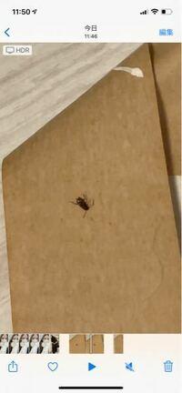 これはゴキブリの子どもでしょうか そんなに歩くのは早くなく触覚が長かったです  1匹いたら何匹も家にいますでしょうか。