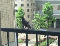 野鳥に詳しい方にお聞きします。この鳥の名前を教えて頂けませんか、とてもかわいい声でさえずっていました。