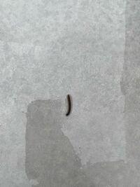 これはヤスデですか?ムカデですか? 体長3〜4センチくらいです。 最近引っ越したのですが、庭で毎日のように見かけます。大量発生しているのでしょうか? 虫が苦手なので駆除したいのですが、どうしたらいいか教えてください。