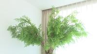 この植物の種類名を教えてください。