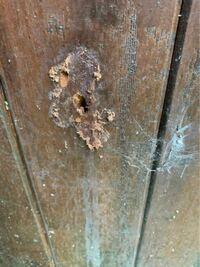 外壁にこのような穴が開いていてシロアリ駆除で業者に来てもらったらクマバチではないかということでした。 普通の殺虫剤で自分で殺せばいいと言われたのですがどのような殺虫剤を使えばいいんでしょうか?