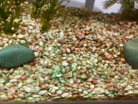 水槽の砂利が写真のように緑色に変色していきます。原因と対処法を教えてください