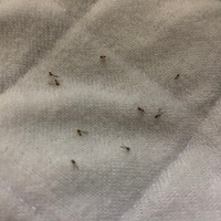 羽アリ大量発生  こちらの写真の羽アリの名前は分かりますでしょうか?  家に100匹以上湧くことが月1(夜8時頃)くらいであり、発生源が分からず困っています。 いつの間にか大量に湧いている感じです。 掃除した後も気づいたらまた固まりでいたりします。 対策方法があれば教えて頂けないでしょうか。