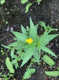 この植物の名前を教えてください。空き地に生えてた雑草です。