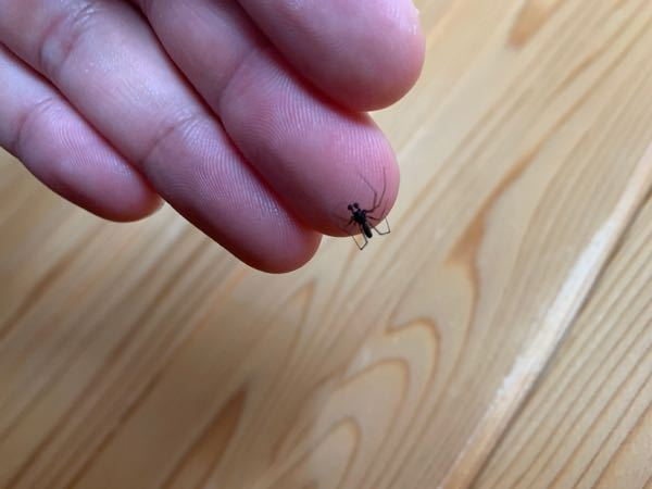 この蜘蛛なんていうのでしょうか?目みたいのが飛び出てます。