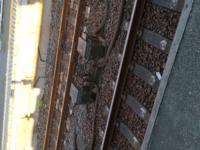 電車の線路脇にあるこの装置はなんの役割があるのでしょうか? ちなみに架空電車線方式でした。