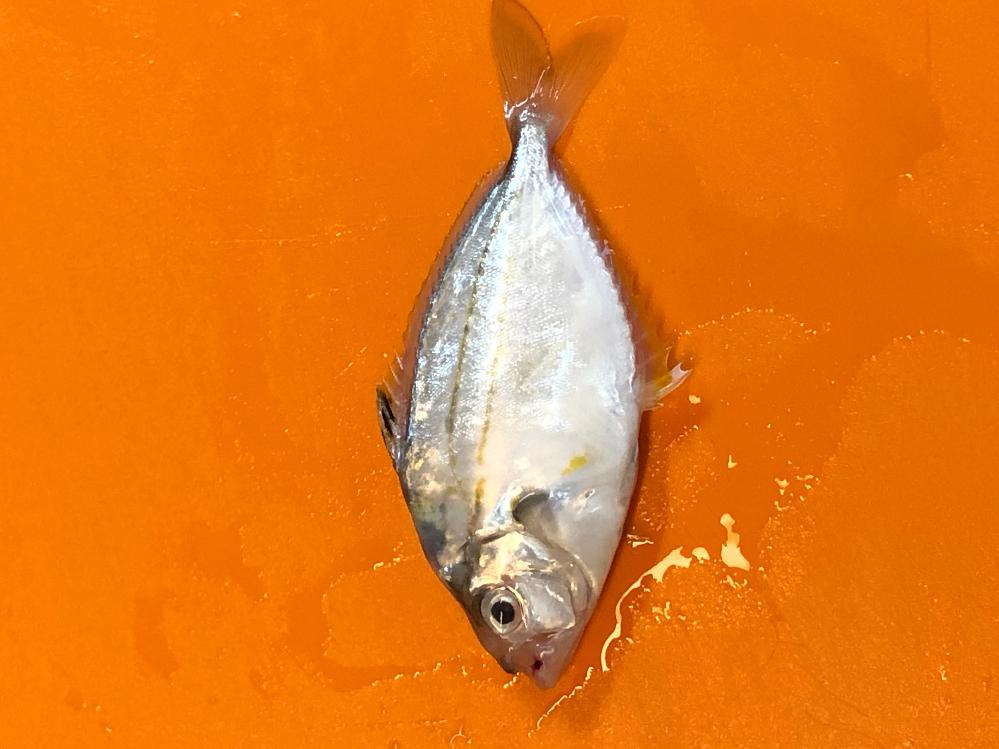 最近、茨城県日立市の漁港で釣りに行っている釣り人です。 先日、投げ釣りでこんなのが釣れました。 カニの方は多分ガザミだと思いますが美味しい食べ方知っている方がいたら教えて下さい。 魚さんの方は、初めて釣りました。何という魚ですかねー。サイズは15センチ位ですが食べれる魚ですかねー。 詳しい方、教えて下さい。