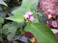 福岡県背振山系の600m付近で撮りました。この植物の名前をご教示ください。