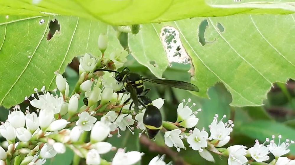 蜂の名前を教えて下さい