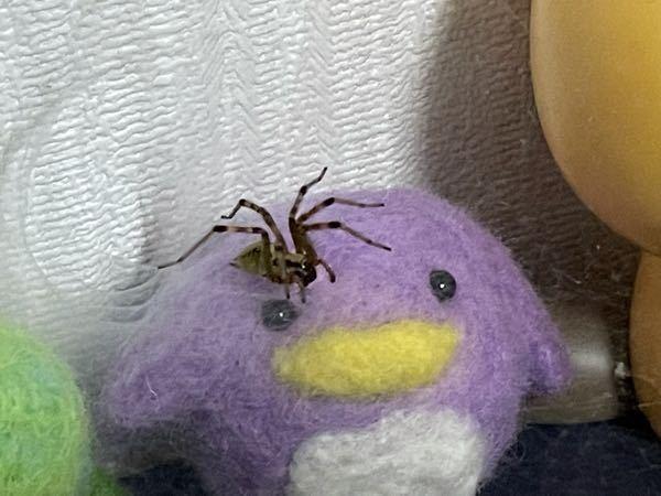 これってなんて言う蜘蛛ですか? 虫を喰ってくれるなら放置していいんですが 日に日に蜘蛛の巣が拡大してるので心配になりました
