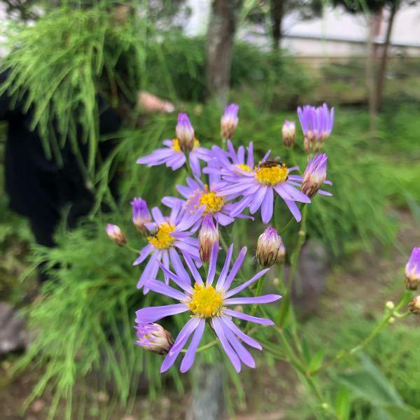 この花の名前を教えてください 祖母が気になっていて……