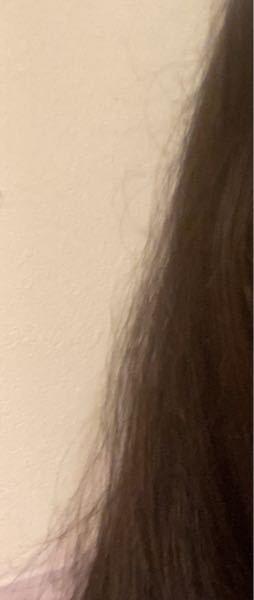 写真がぼやけていてて、すみません! 髪質を直したいのですが、教えてください! 私の髪質は写真の通り、パサパサで切れ毛が多いです! 毛量も割と少なく、髪質はどちらかと言うと柔らかいです。 アイロンなどは最近ほぼしてないです! ですが、ほぼ毎日お団子をしています。 トゥルトゥルな髪にしたいです…!