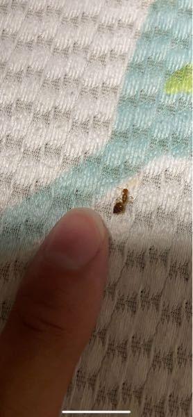 写真の昆虫は何ですか? 刺すタイプのアリですよね?