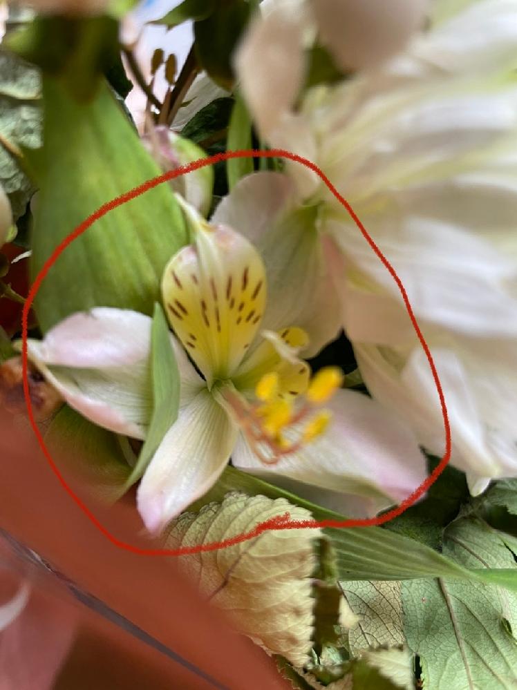 【至急】 画像の花の名前を教えてください