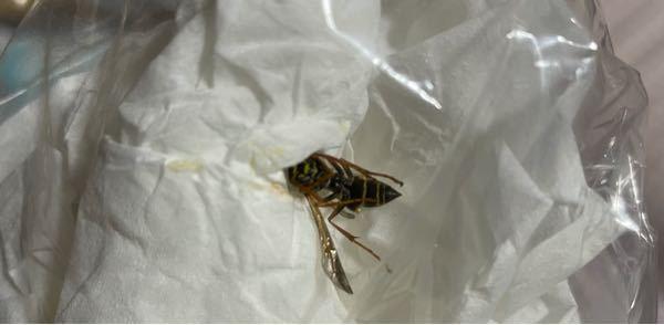 緊急!! 蜂に刺されました これはなんの蜂なのでしょうか? また、刺されたと噛まれたはちがいますか?