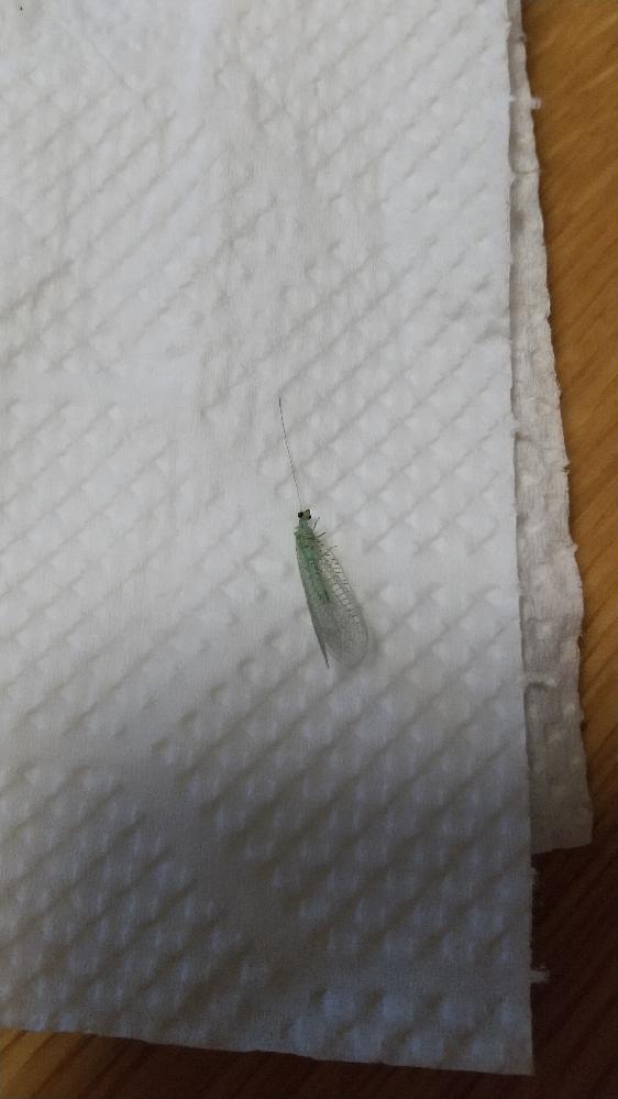 この虫は何と言う名前でしょうか?