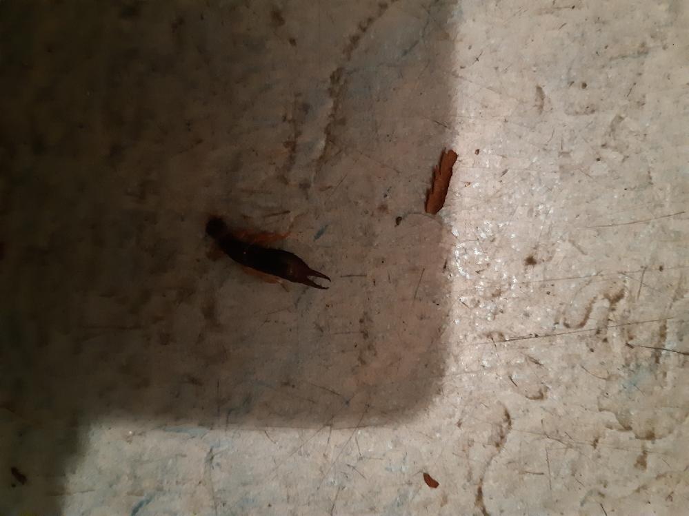この虫は何かわかりますか? (画像分かりにくくてすみません)
