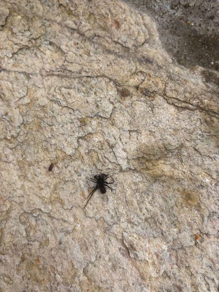 この虫を知ってる人いますか アリのような蜘蛛のようなサソリのような感じです。