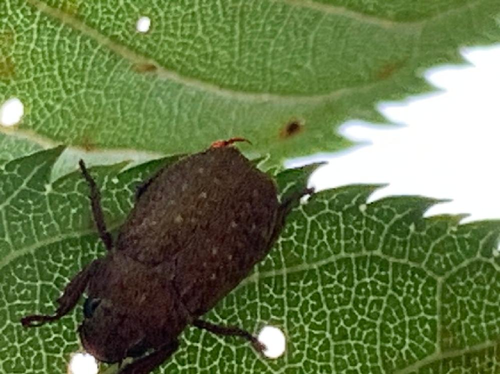 この虫は何でしょうか? ご存知の方教えてください! よろしくお願いします。