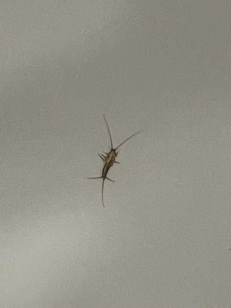なんの虫ですか...
