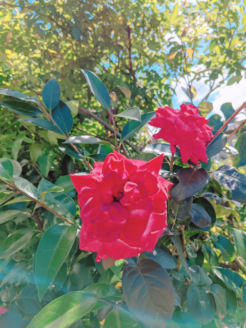 庭に咲いている花 癒やされますか?