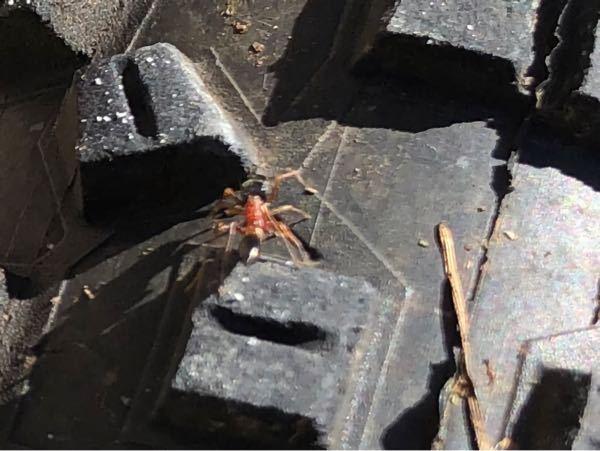 ピンぼけすみません。 これなんのアリですかね? 頭が大きく胴が赤かったです。