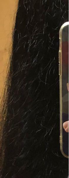 これって切れ毛ですか?枝毛ですか? 枝毛の対処法とかあったら教えて下さい