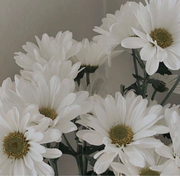 この花なんですか?ガーベラですか?