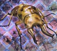 ムシキングのこのカブトムシの名前知っていますか?