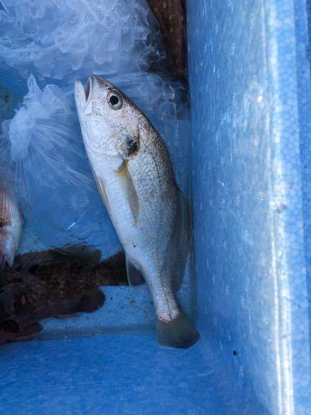 この魚の名前はなんですか?