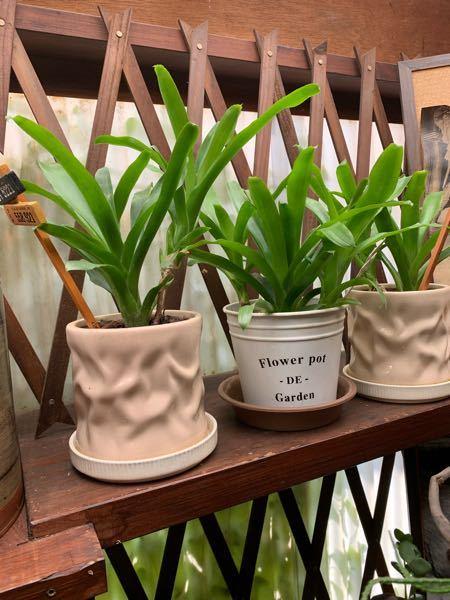 観葉植物か、シダ系統なのか、蘭系統なのか、 この植物はなにですか?