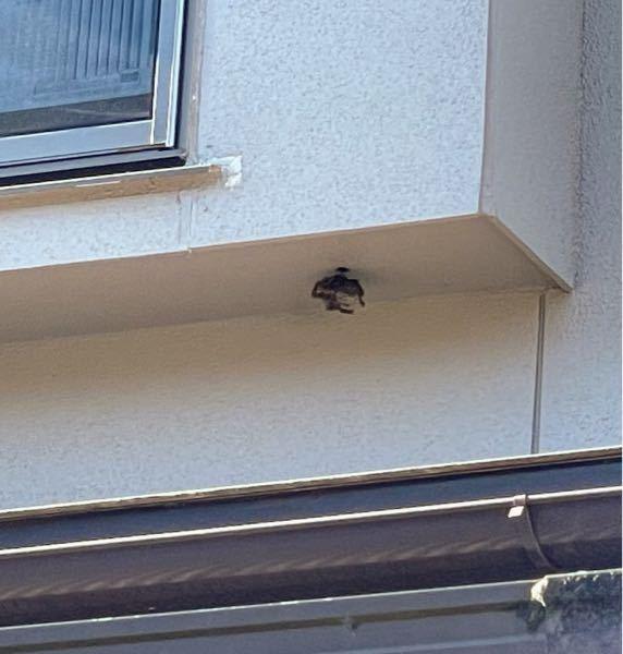 家に蜂の巣らしき物を見つけました まだいるかは分かりませんがなんの蜂の巣ですか?