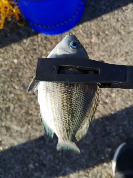 これは何という魚ですか?海で釣りました。 また、オススメの調理法などがございましたら教えていただけるとありがたいです!