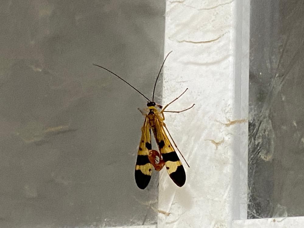 私はじめてみる虫でした。 なんという子か知っている方いましたら教えて下さい。