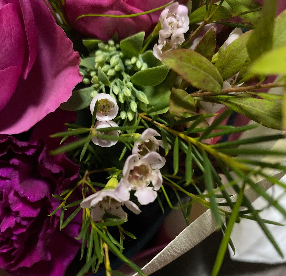 この小さい白いお花の名前はわかりますか? 自分で調べてはみたのですが、スイートアリッサムで合っているのでしょうか? 頂いたお花なのでわかりません。 あと、切り花になっているのですが、ここら鉢植えで繁殖していく方法はありますでしょうか? よろしくお願い致します。