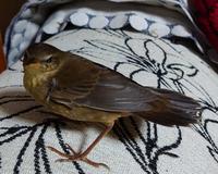 この鳥の名前を教えて下さい