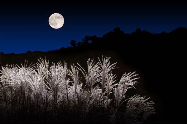 午後になり曇ってきました 相変わらず遠くでセミが鳴いてるけど 中秋の名月 今夜見られそうですか?