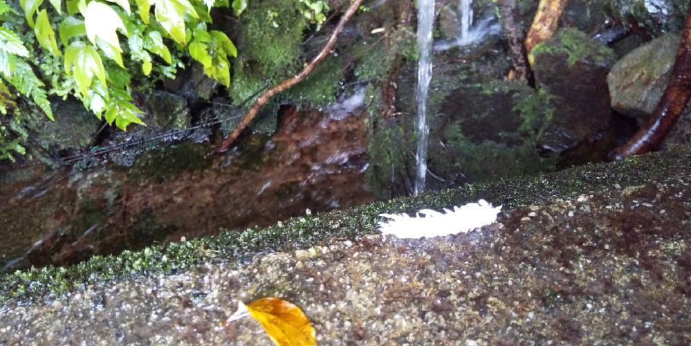9月の初め、山に水汲みに行った時、初めて白い毛虫?を見つけました。これは何の幼虫でしょうか?